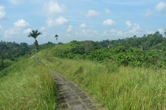 Campuhan Ridge Walk: Looking at the path as it continues back to Ubud.