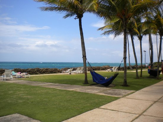 The Condado Plaza Hilton: grassy area of hotel with hammocks
