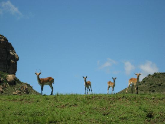 Mount Everest Guest Farm : Bucks