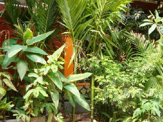 Bou Savy Guest House: Garden