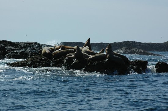 The Whale Centre & Museum: Sea lions on an island!!