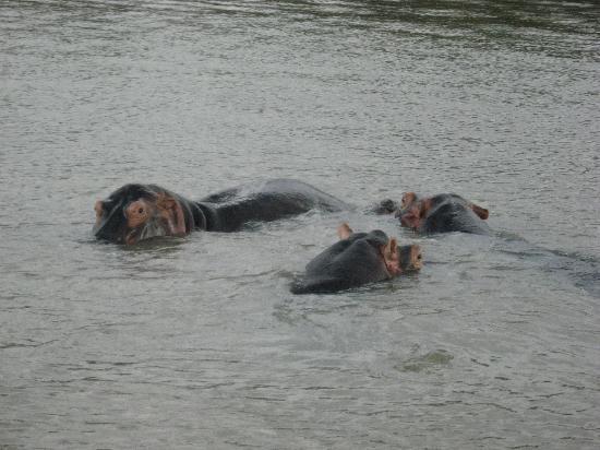 Sunset Lodge: Hippo spotting on the river cruise
