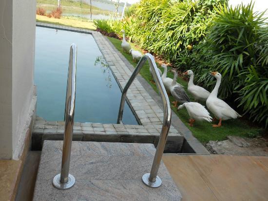 The Windflower Resort and Spa Pondicherry: Pool of Pool villa