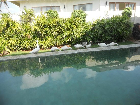 Pool villa picture of the windflower resort and spa pondicherry pondicherry tripadvisor for Villas in pondicherry with swimming pool