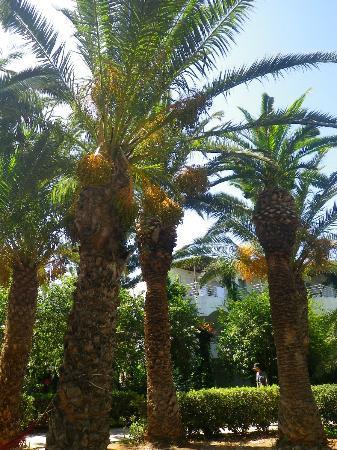 Apollonia Beach Resort & Spa 사진