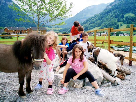 Erlebnisgastehaus Kanisfluh: Eigener Streichelzoo mit Ponys, Ziegen, Hühner, Enten u.v.m.
