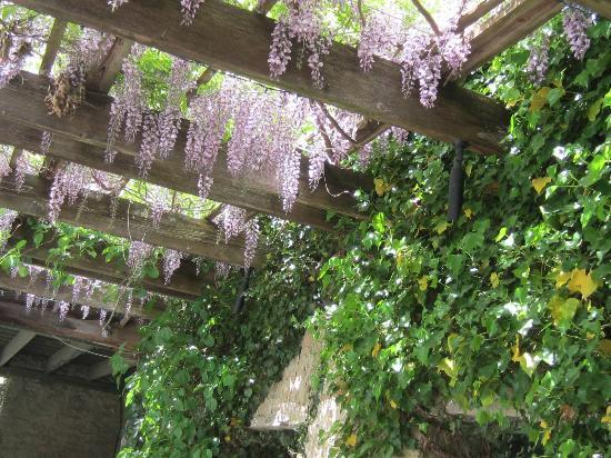 Goodstone Restaurant: Wisteria blossoms by the estate pool