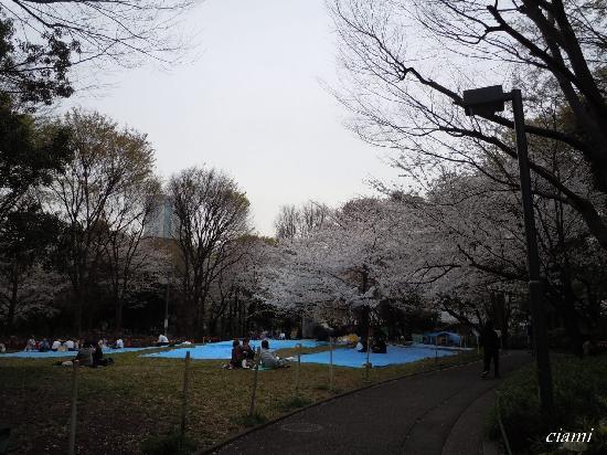 Shinjuku Chuo Park : 新宿中央公園