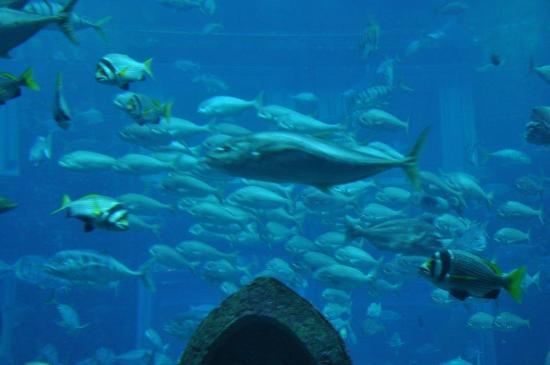 فندق لاندمارك: Atlantis qauarium