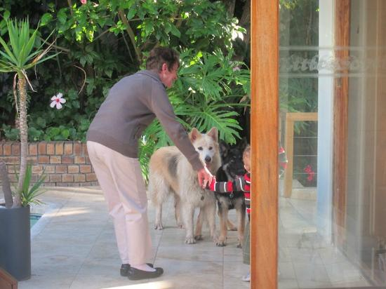 Little Scotia Guest House: dogs in the communal area