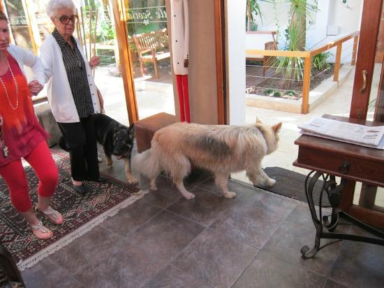 Little Scotia Guest House: dogs and guests