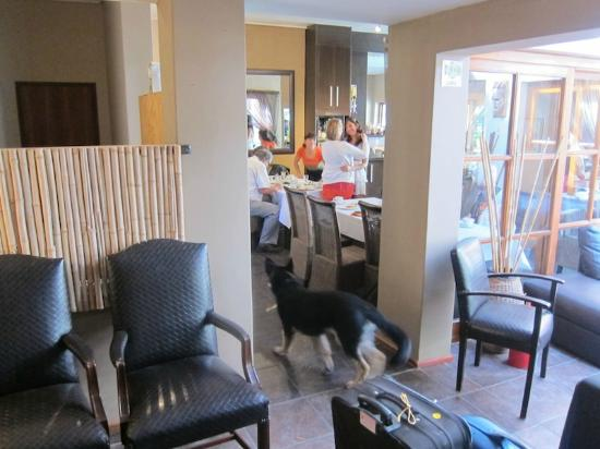 Little Scotia Guest House: dogs in the dining area
