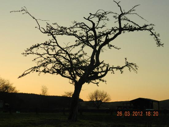Kielder Lodges: Grounds