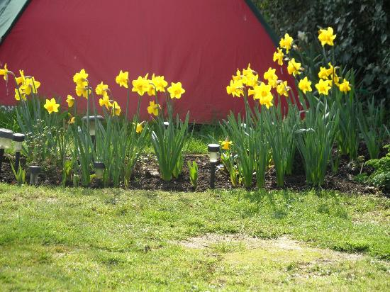 Countryair Bed & Breakfast: A tent in the garden and flowers