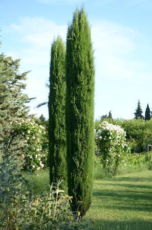 Mas Caroubier : Gartenimpression