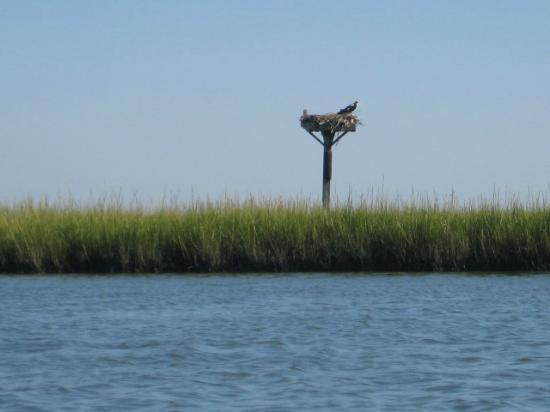 Coastal Kayak: Wildlife Nests on the Bay