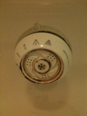 Sleep Inn Nashville: Icky shower head