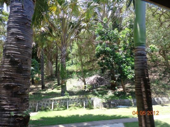 Sandbar Boquete Beach Club: hillside view