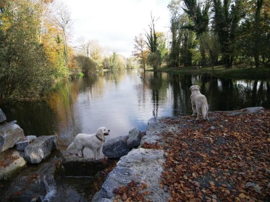 Lyrath Estate Hotel & Spa: Dogs by Lake