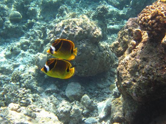 Reethi Beach Resort: Great Snorkelling Pic