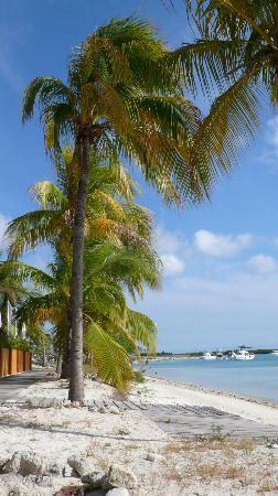 Aruba Surfside Marina: Strand direkt vor der Tür