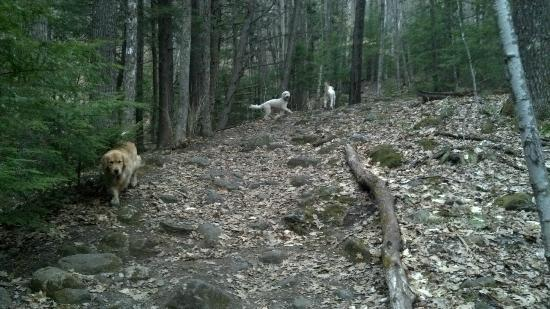 Rattlesnake Mountain: A stream on the left gives the dogs a drink the first 1/3 of the hike.