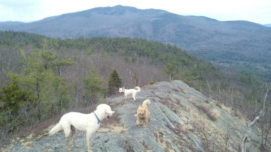 Rattlesnake Mountain: Northeast view view.  Watch for a muddy puddle a dog will love in the summit center