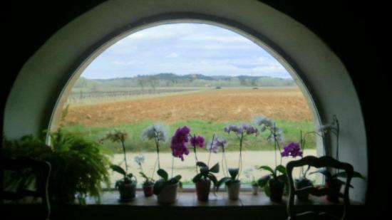 La Victorine : Vue sur les vignes