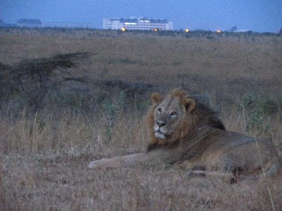 Nairobi National Park: city in the background