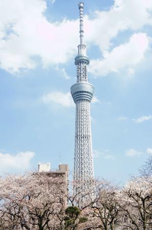 โตเกียวสกายทรี: スカイツリーと桜