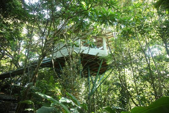 Neverland Suite Picture Of Hidden Canopy Treehouses