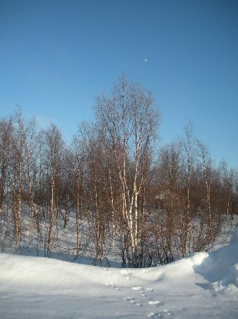 Karesuando, Sweden: View is trees and snow
