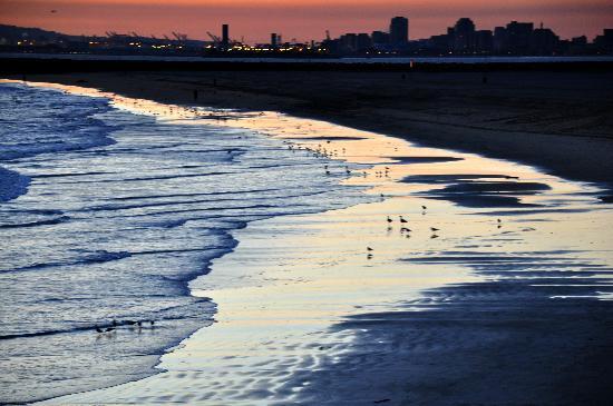 Walt S Wharf Seal Beach