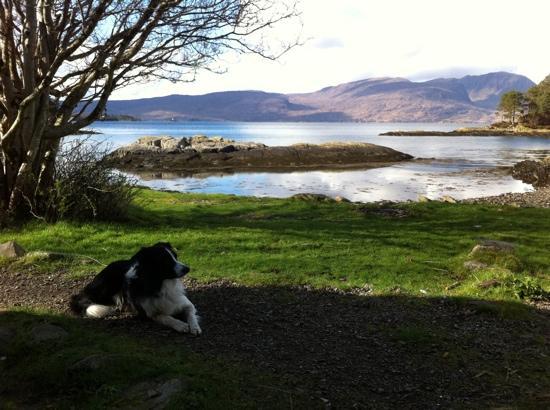 Craig Highland Farm: view from small beach door