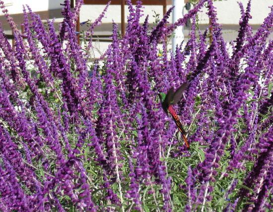 Entre Cielos : Many birds enjoying the gardens