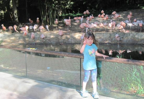 Zoo Atlanta: Flamingo habitat where Sylvie was saying that they were all standing on 2 legs.