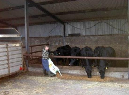Glenraha Farmhouse B&B: Sean on the working farm
