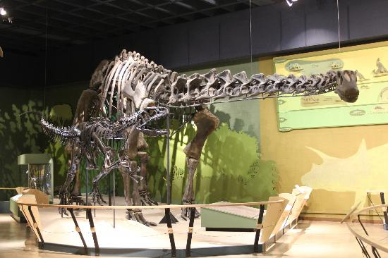 Short from the dinosaur display picture of cleveland Dinosaur museum ohio