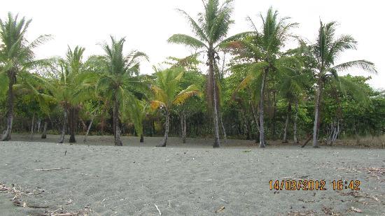 Las Islas Lodge: Plage de Puerto Jimenez