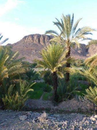Auberge La Terrasse des Delices: oasis