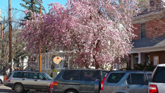 Lucile's exterior on a spring morning