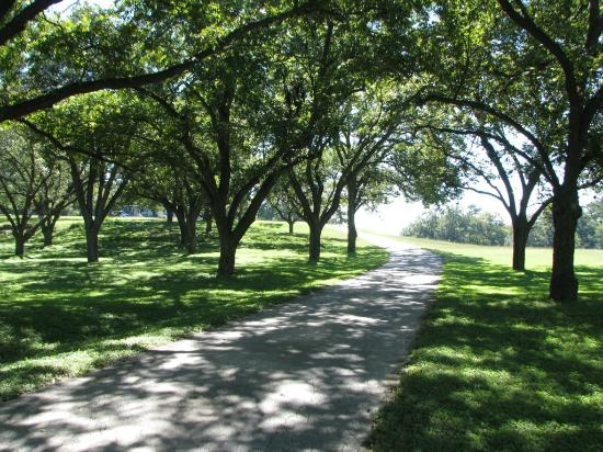 Haven River Inn: The beautiful pecan orchard lining the driveway