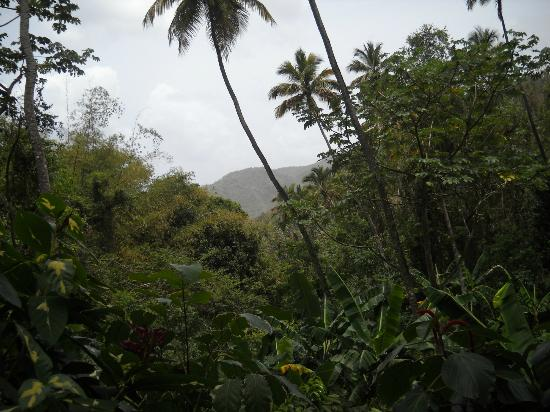 Son of Man Sea Tours: Rain forest near the falls
