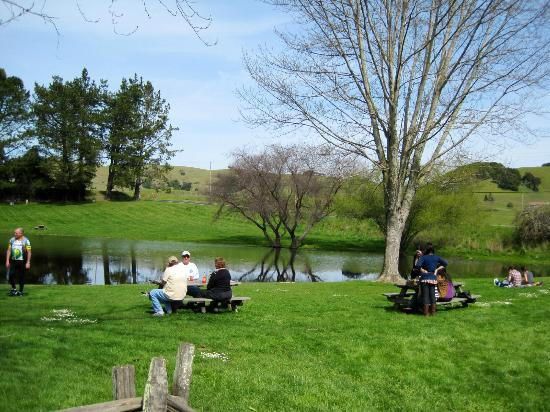 Marin French Cheese Company: Outside picnic area
