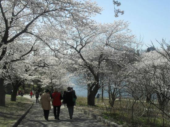 High Park: Beautiful Spring day
