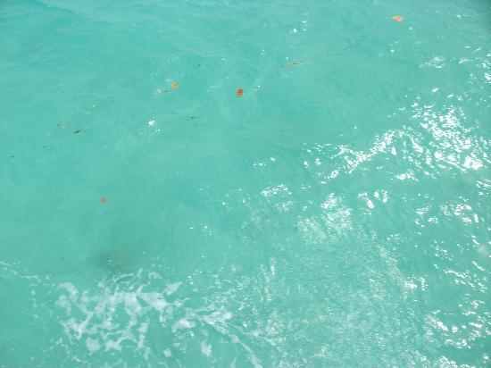 Splash Sports Catamaran Cruises: A view of the waters from the boat. Makes you just want to jump in