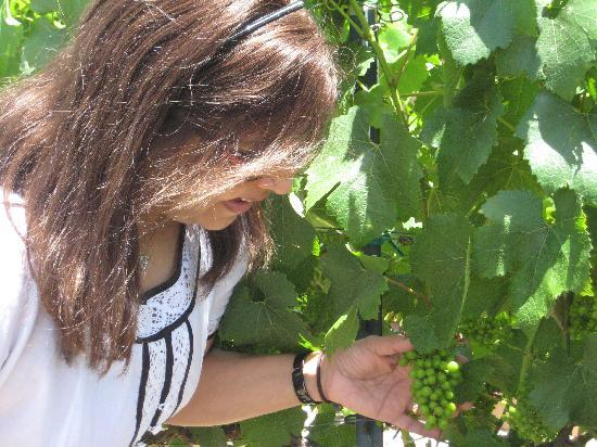 Chardonnay Lodge: Guest can enjoy taking photos in the Vineyard