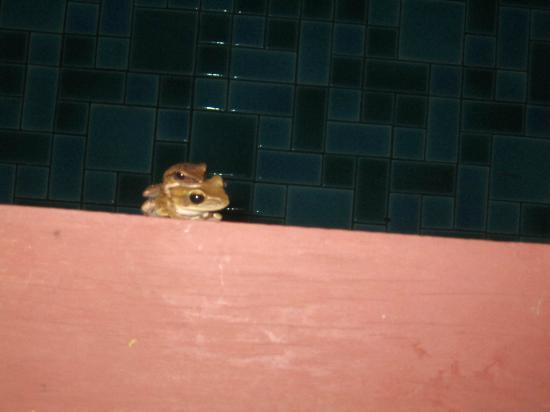 The Elements Krabi Resort: frogs come out to play at night.