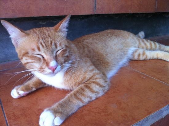 Sawah Sunrise Bed & Breakfast: aslan the cat