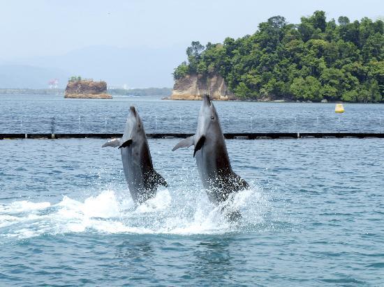 Ocean Adventure: Dolphins